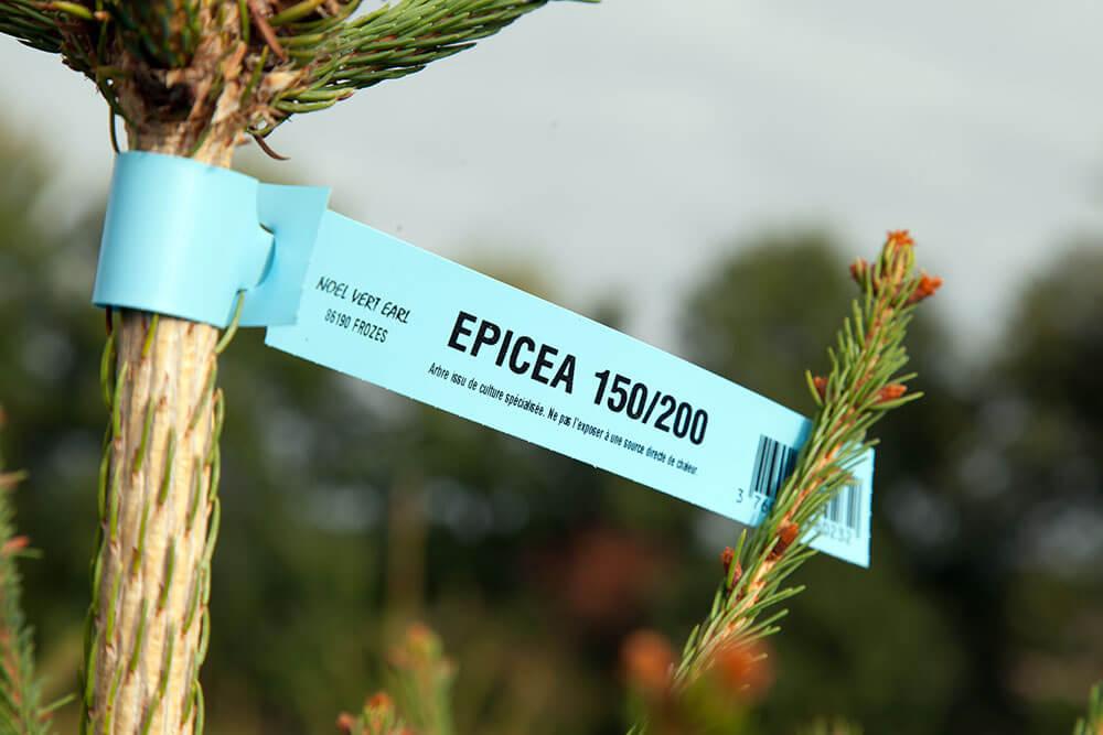 epicea_01-8